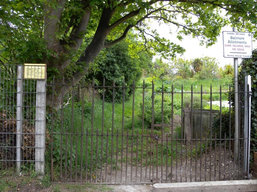 Balmore Allotments Caversham (1)